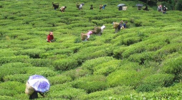 Beautiful Place Assam